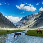 Must-do Things in Ladakh